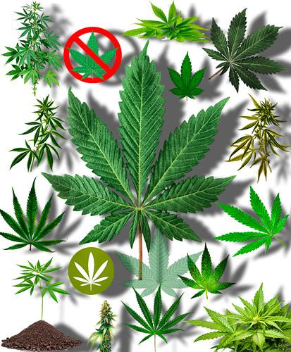 Видео про коноплю скачать цветение марихуаны в аутдоре
